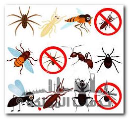 طرق القضاء على الحشرات المنزلية